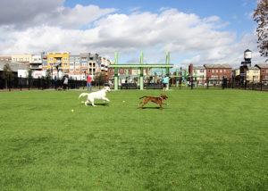 artificial grass dog parks